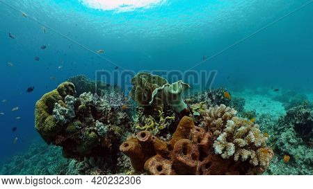 Blue Sea Water And Tropical Fish. Tropical Underwater Sea Fish. Philippines.