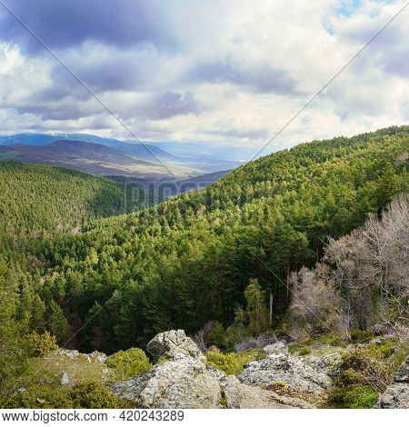 Green Landscape Of Wooded Valley With Pine Trees And Large Conifers, Mountains In The Background And