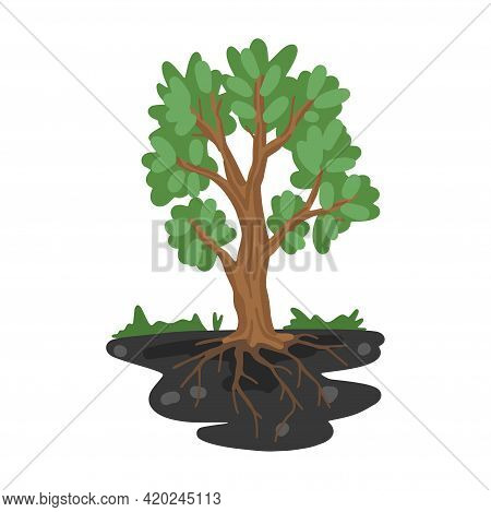 Tree With Roots In The Ground. Sectional Land. Tree Growth Illustration. Vector Flat Cartoon Drawing