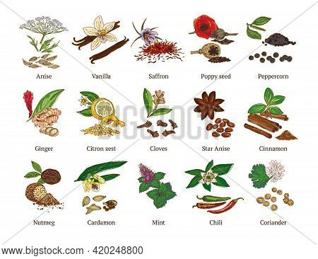Colorful Sketch Healthy Spices Collection With Culinary Natural Botanical Herbs Isolated Vector Illu