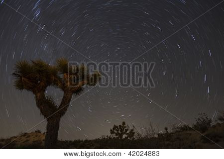 Joshua Tree with star trails in California's Mojave desert.