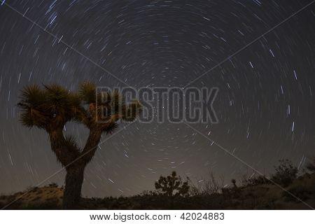 Joshua Tree with star trails in California's Mojave desert.