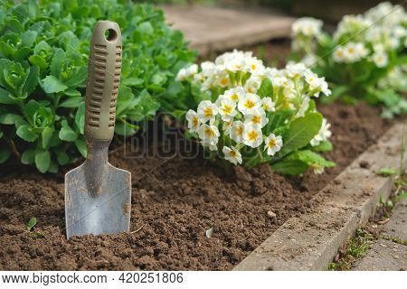 A Small Garden Shovel Is Stuck Next To The Flowers.