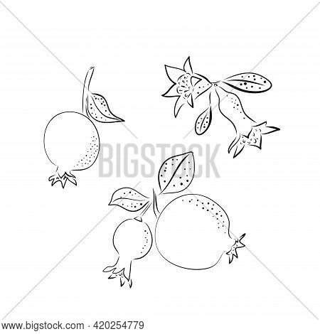 Red Ripe Black Line Pomegranate And Tropical Leaves Vector Illustration On White Background. Hand Dr