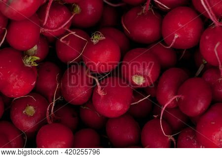 A Pile Of Fresh Raw Red Radish. Fresh Radishes. A Large Bouquet Of Fresh Beets And Radish. Radish In