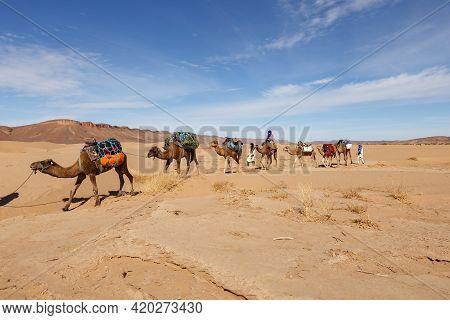 Errachidia Province, Morocco - October 22, 2015: Camel Caravan Goes Through The Sahara Desert.