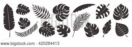 Tropical Leaves Vector Set, Black Palm Leaf Doodle Design Isolated On White Background. Nature Exoti