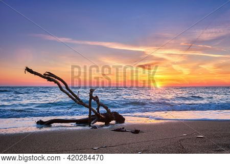 ld wood trunk snag in water at tropical beach on beautiful sunset. Nature seascape background. Sun setting in waves of Aegean sea. Agios Ioannis beach, Milos island, Greece