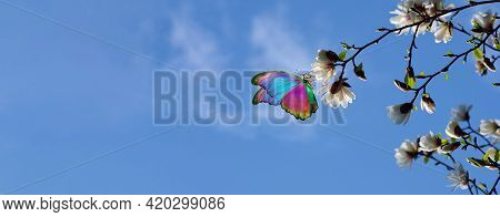 Branches Of Blooming White Magnolia And Tropical Morpho Butterfly On A Background Of Blue Sky With C