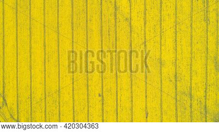 Top Down View Of Yellow Canola Field. Cultivated Rapeseed Canola Plantation Field