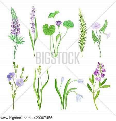 Violet Flowers Or Blossom On Leafy Stalk Or Stem Vector Set