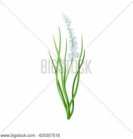 Violet Flower Or Blossom On Leafy Stalk Or Stem Vector Illustration