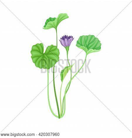 Tall Stem Or Stalk With Violet Floret And Green Broad Leaves Vector Illustration
