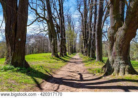 Linden Tree Alley With Dusty Country Road. Near Lemberk Castle, Czech Republic