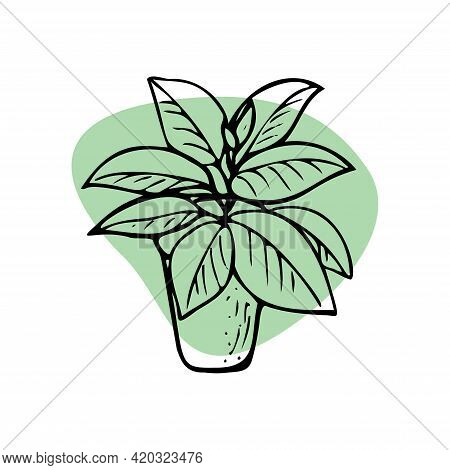 Home Plants. Vector Houseplants, Icons. Linear Illustration Artistic Lines And Strokes. Indoor Plant