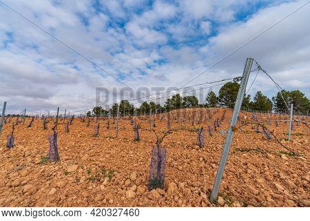 Vineyard In The Hillside Under Cloudy Sky