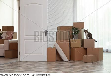 Cardboard Boxes And Cat In Room On Moving Day