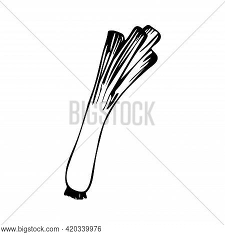 Hand Drawn Leeks Isolated On A White Background. Doodle, Simple Outline Illustration. It Can Be Used