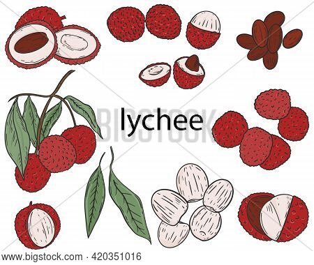 Lychee Fruit Set. Vector. Collection Of Colored Fruits On A White Background. Separate Berries, Halv