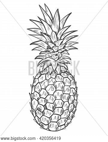 Pineapple Sketch. Vector. Whole Exotic Fruits. Drawing On A White Background. Hand Drawing. Single L