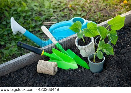 Plastic pot and garden tools on flower bad Seedlings Sprouting In Spring garden life style concept.