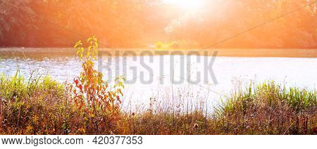 Autumn View With Different Vegetation By The River During Sunset, Panorama