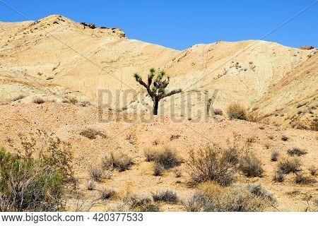 Lone Joshua Tree On An Rural Plain Besides Eroded Hills And Sagebrush Taken At Arid Badlands Taken I