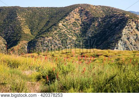 Chaparral Shrubs And Wildflowers During Spring On The High Desert Plateau With Barren Hills Beyond T