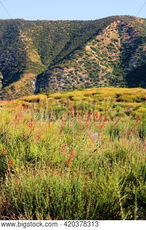 Chaparral Plants And Wildflowers During Spring On An Arid Plateau Surrounded By Barren Mountains Tak