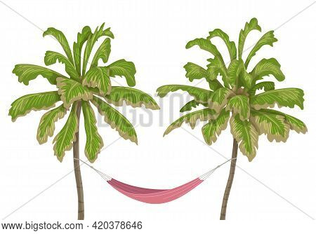 Pink Hammock Hanging Between Two Old Pines On White Background. Health Resort, Rest At Nature, Campi
