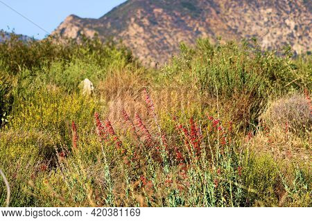 Chaparral Shrubs And Spring Wildflowers On An Arid Plateau Surrounded By Barren Hills Taken At A Cha