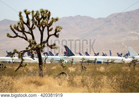 May 12, 2021 In Victorville, Ca:  Retired Airliner Aircraft In Storage Surrounded By Joshua Trees On