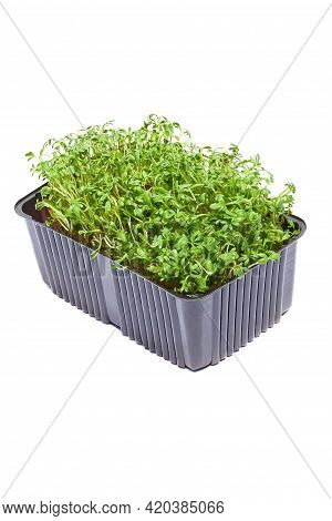 Micro Greens Arugula Sprouts On A White Background. Germination Of Seeds For Nutrition. Seedlings Mi