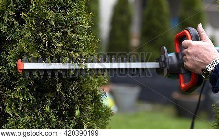Gardener Using An Hedge Clipper In Garden