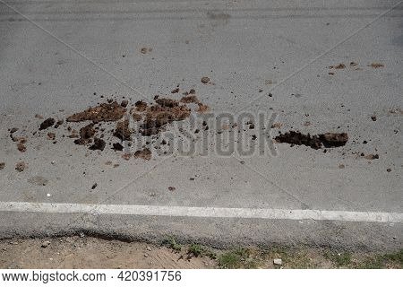 Cow Dung On An Asphalt Road Hit By The Wheel Of The Car Pedal. Vft