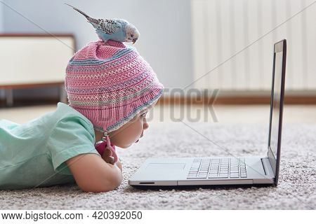 Funny Quarantine Moments. A Parrot Sits On The Head Of A Child In A Hat. The Girl Looks At Her Lapto