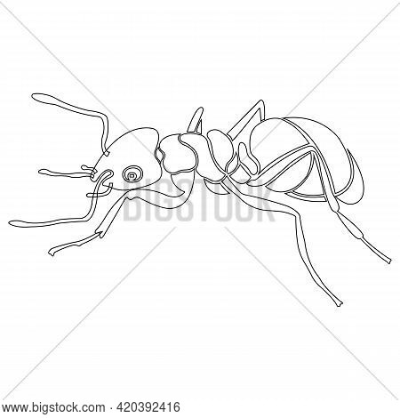 Ant Insect Silhouette Contour. Linear Tattoo Style. Design Suitable For Insect Lover Logo, Parasite