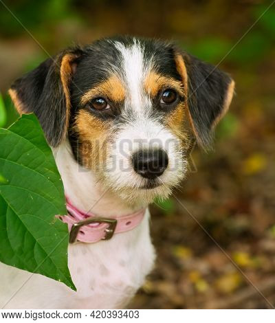 A Cute Shy Puppy Dog Is In Nature In Out A Vertical Image Format