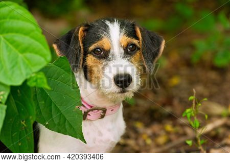 A Cute Shy Puppy Dog Is In Out Nature