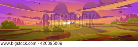 Rice Field Terraces, Green Paddy At Sunset. Vector Cartoon Illustration Of Summer Landscape With Cro