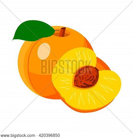 The Peach Is Whole With A Leaf And Half With A Stone. Vector Isolated On A White Background