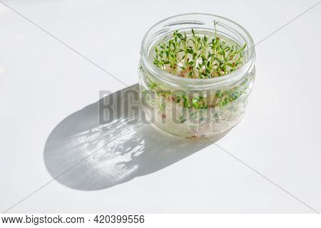 Microgreens Sprouts Of Watercress In A Glass Jar. Fresh Microgreens Superfood Concept Shows Easy Hom