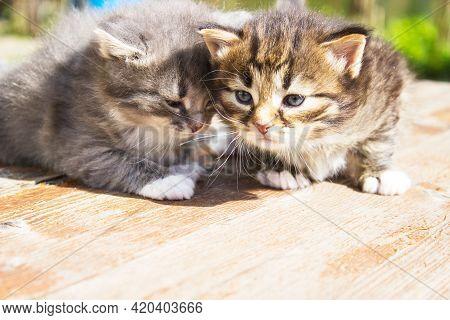 Natural Lighting And Shadow Of Blur Newborn Main Coon Kitten On Blanket. Newborn Concept.newborn Kit