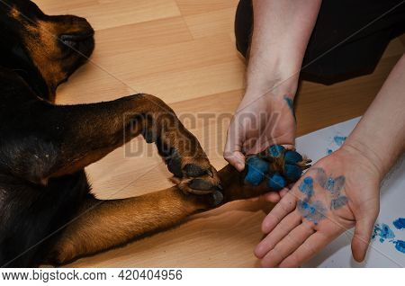 A Male Demonstrates A Blue Pet Paw Print On His Palm. A Female Rottweiler With Blue Paint On Her Paw