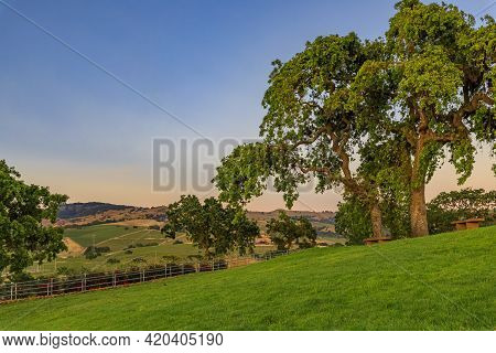 Landscape With Hills And Valleys At Sunset At A Vineyard In The Spring In Napa Valley, California, U