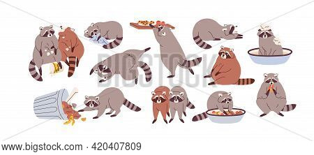 Cute Funny Raccoons Set. Slow Lazy Racoon Characters Eating, Overeating, Sleeping And Relaxing. Slug