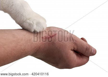 Scratch On A Man's Hand Made By A Cat, A Cat's Paw On A Hand Of An Owner, Close-up, Isolated On Whit