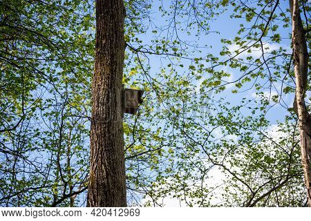 Wooden Bird Cage In A Koak Trunk Against A Blue Sky And Green Tree Leaves. A Bird Cage Is Waiting Fo