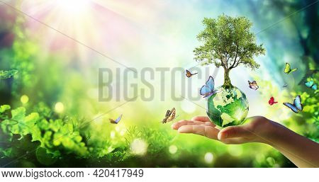 Environment - Tree Growth On Planet In Green Forest With Butterflies
