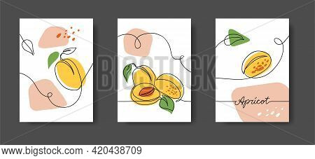 Apricot Fruits, Wall Line Art Decor. Set Of Vector Illustrations, One Continuous Line Decoration Of